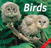 Birds: Little Kiss21