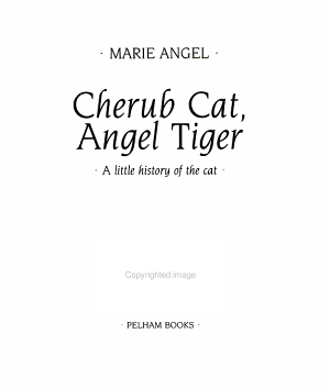 Cherub Cat  Angel Tiger