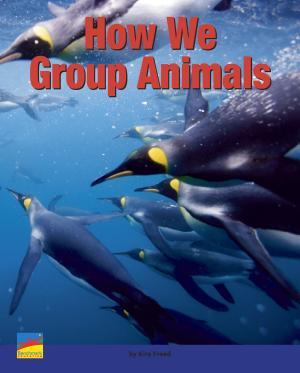 How We Group Animals PDF