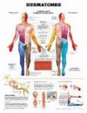 Dermatomes PDF