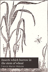 Insects which Burrow in the Stem of Wheat