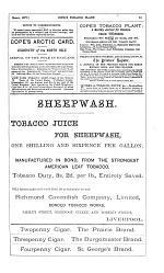 Cope's Tobacco Plant