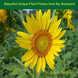 Beautiful Unique Plant Photos from My Backyard PDF