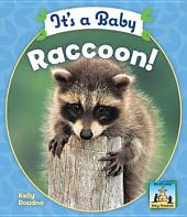 It's a Baby Raccoon
