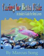 Caring for Betta Fish