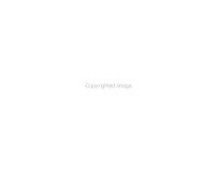 Nature s Paintbrush