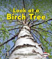 Look at a Birch Tree