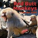 Red Butt Monkeys Calendar 2020 PDF