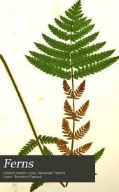 Ferns: Osmunda, Hymenophyllum, Trichomanes, Davallia, Thyrsopteris, Cibotium, Trichiocarpa, Deparia, Dicksonia, Gleichenia, Cyathea, Hemitelia, Alsophila, Todea, Dictyoxiphium, Mohria, Anemidictyon, Lygodium, Angiopteris, Marattia