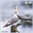 Gulls 2022 Calendar