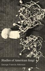 Studies of American Fungi