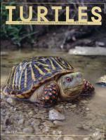 Turtles PDF