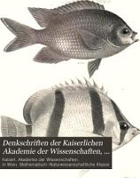 Beitr  ge zur Kenntniss der Flussfische S  damerikas PDF