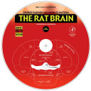 The Rat Brain in Stereotaxic Coordinates PDF