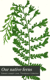 Our Native Ferns: Or, A History of the British Species and Their Varieties ...
