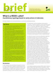 What is a REDD+ pilot?: a preliminary typology based on early actions in Indonesia