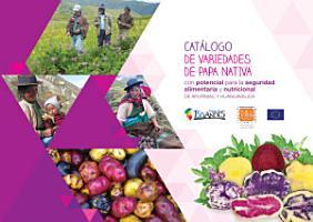 Cat  logo de variedades de papa nativa con potencial para la seguridad alimentaria y nutricional de Apur  mac y Huancavelica PDF