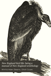 New England Bird Life: Being a Manual of New England Ornithology: Non-oscine Passeres, birds of prey, game and water birds