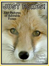 Just Foxes! vol. 1: Big Book of Photographs & Fox Pictures