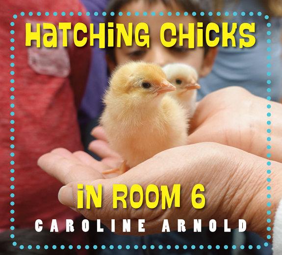 Hatching Chicks in Room 6 PDF