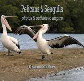 Pelicans & Seagulls: Photos & outlines to inspire