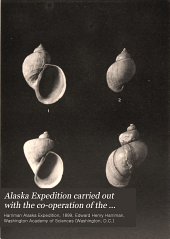 Alaska Expedition carried out with the co-operation of the Washington Academy of Sciences: Volume 13
