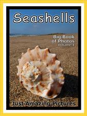 Just Seashells! vol. 1: Big Book of Seashells Photographs & Pictures