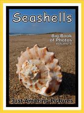 Just Seashells! vol. 1: Big Book of Seashells Photographs & Pictures