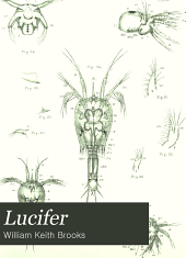 Lucifer: A Study in Morphology