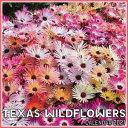 Texas Wildflowers Calendar 2021