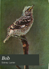 Bob: The Story of Our Mocking-bird