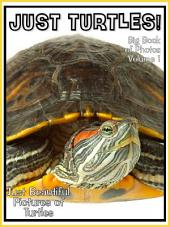 Just Turtles! vol. 1: Big Book of Turtle Photographs & Pictures