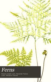 Ferns: Gymnogramma, Nothochlaena, Niphobolus, Polypodium
