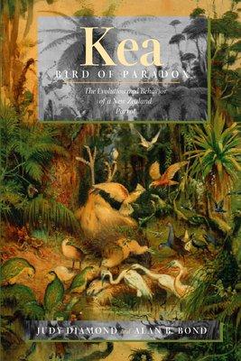 Kea  Bird of Paradox