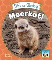 It's a Baby Meerkat!