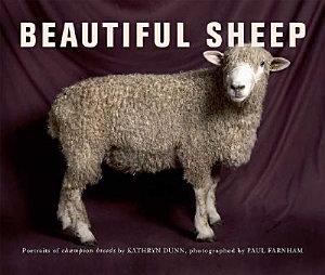 Beautiful Sheep PDF