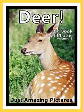 Just Deer! vol. 1: Big Book of Photographs & Deer, Fawn, Buck Pictures