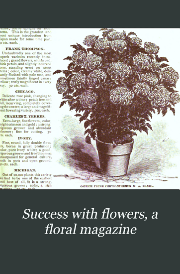 Success with Flowers  a Floral Magazine PDF