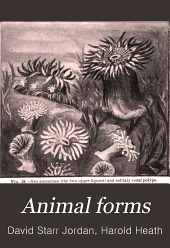 Animal Forms: A Textbook of Zoology