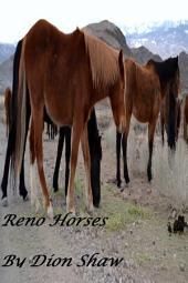 Reno Horses: Dowload Free Pictures