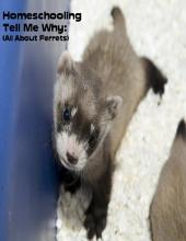 Homeschooling Tell Me Why: (All About Ferrets)