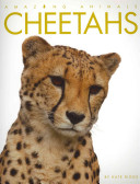 Amazing Animals Cheetahs