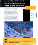 How to Identify and Manage Pine Bark Beetles