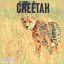 Cheetah 2021 Wall Calendar