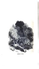 Էջ 126