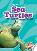 Sea Turtles Book PDF