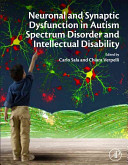 Synaptic Dysfunction in Autism Spectrum Disorder and Intellectual Disability