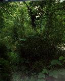 SMITHSONIAN BK GIANT PANDAS
