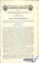 Cicuta, Or Water Hemlock