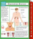 Endocrine System  Speedy Study Guides
